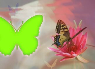 TOP Green Screen Butterfly Video Frame 2019